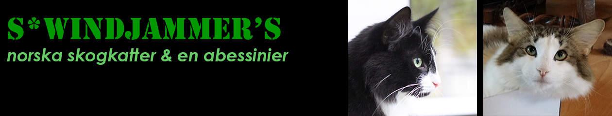 S*Windjammer's katter