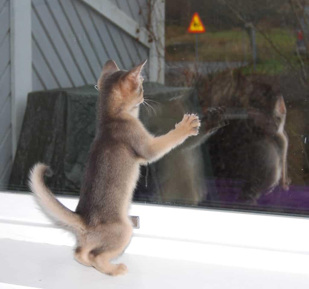 Kattunge står och tittar ut genom fönstret.
